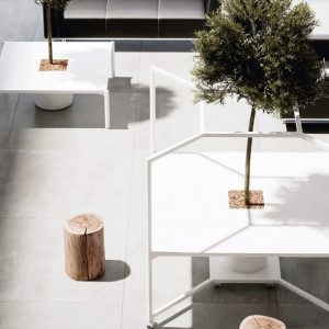 Hub white desk with tree growing
