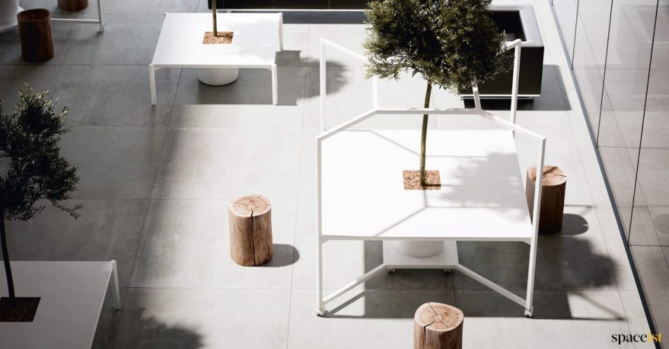 Desk with olive tree